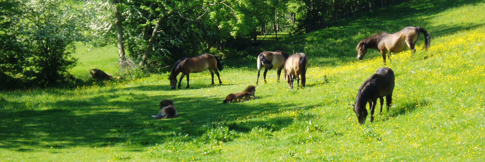 Horses On The Farm at Long Byres